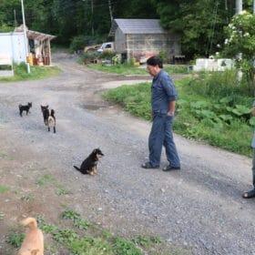 高橋さん宅にはクマよけのためにワンちゃんたくさん。