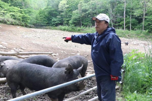 岩手県岩泉町の山奥で養豚する高橋さん