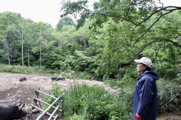 岩泉町の山奥で養豚する高橋さん。のびのび育つ豚さん。