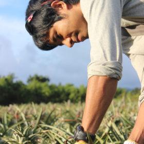 西表島農園ファイミールの池村一輝さん。オーガニック農法。